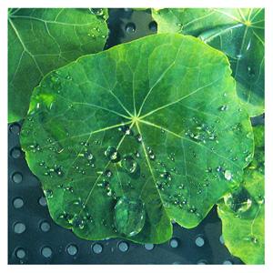 lotosový květ byl předlohou pro průmysl, který okopíroval jeho samočistícího vlastnosti